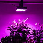 How Beneficial Is It to Use LED Grow Lights?