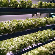 Everything You Should Know About LED Grow Lights and Its Utilization in Plants