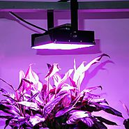 What Are The Possible Advantages of Using Grow Lights To Grow Plants At Home?