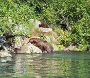 Bear Watching Alaska - Alaska Halibut Fishing Charter