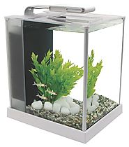 Fluval Tanks - DoggyFriend