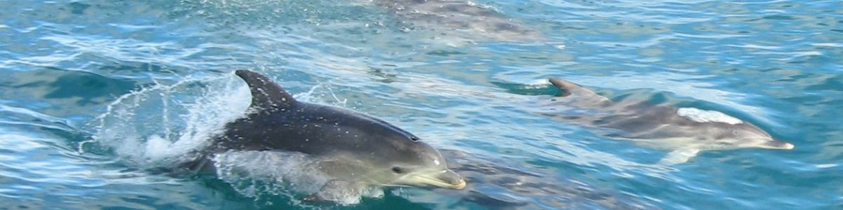 Headline for 5 Reasons to Visit Port Stephens- The dolphin capital of Australia