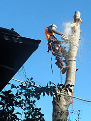 Tree Services from Professionally Qualified Arborists