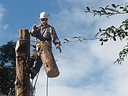 Looking for Tree Pruning Company?