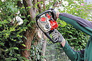 Different Tools Used By Arborists