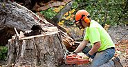 Importance of Getting Tree Removal Balgowlah For Your Property