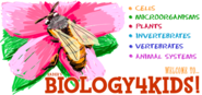 Rader's BIOLOGY 4 KIDS.COM - Biology basics for everyone!