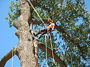 Effective Role of Tree Surgeons in Ringwood Areas