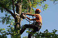 Benefits of Tree Surgeons in Bournemouth