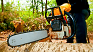 3 Useful Steps for Successful Tree Felling Services
