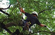 Get Tree Pruning Service at Your Location at any Time