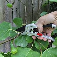 Tips That Must be Known For Hiring a Tree Pruner