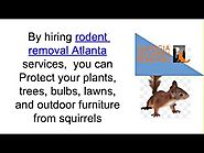 Experts Of Rodent Removal Atlanta