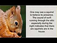 Hire Experts For Squirrels In Attic