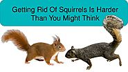 Tips For Finding The Right Squirrel Pest Control Service
