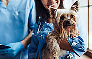 How Can Insurance Offset the Rising Cost of Veterinary Care?