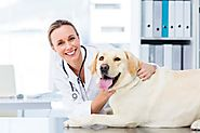 7 Tips to Keep Your Dogs Healthy and Happy | Pet Insurance | New York City, USA | The Insured Pet