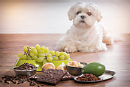 Why Chocolates Are NOT to Be Given to Your Dog