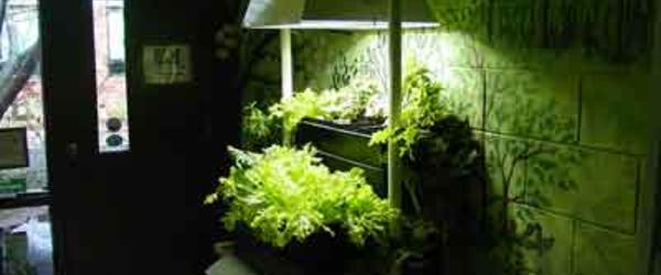Headline for Grow Light Systems For Indoor Gardens 2014