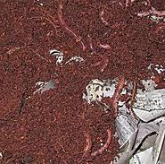 Process of Vermicomposting- One of the Useful Things of Nature |