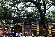 Spend Time Under the Shade of The Bodhi Tree