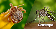 Best Pest Control Services Albany NY | edocr