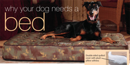 Dog Beds: Important Reasons Your Dog Should Have a Bed