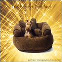Dog Furniture Beds