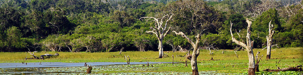 Headline for 05 Best Outdoor Activities in Yala National Park – Kingdom of the Wild