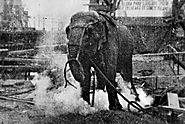 Remembering the Day When Topsy the Elephant Was Poisoned and Electrocuted to Death in Coney Island