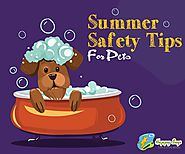 Keep Your Pet Safe This Summer With 5 Effective Tips