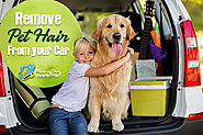 Remove Pet Hair From Your Car With These 7 Effective Tips