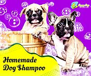 Save Time and Money with Homemade Dog Shampoo