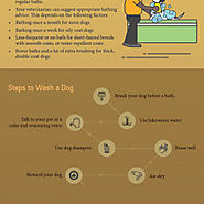 All About Dog And Pet Wash