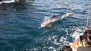 Khasab Oman - Dhow Cruise - Dolphins swimming with the Dhow (Boat)