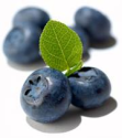 Heritage Blueberries
