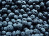 Lindberg's Blueberries