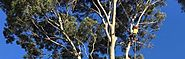Reliable Tree Arborist Melbourne Maintaining a Perfect Ecological Balance