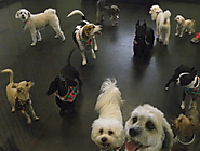 Things Your Pup Can Experience While Spending The Day At Doggie Daycare