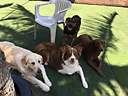 Some Important Questions To Ask A Dog Boarding Facility