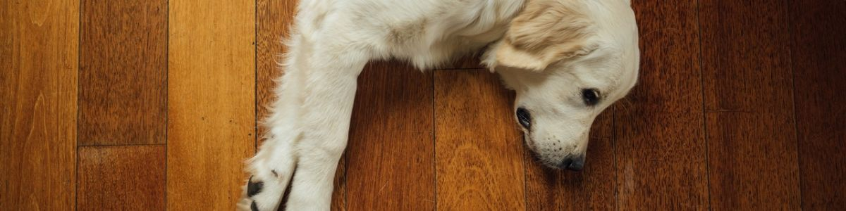 Headline for 7 Best Vacuums for Dog and Cat Owners