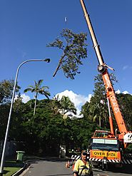 Tree Pruning & Trimming Services On The Gold Coast