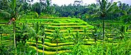 Bali UBUD Tour Package- Get Cheap Ubud Holiday Packages & Deals!!!