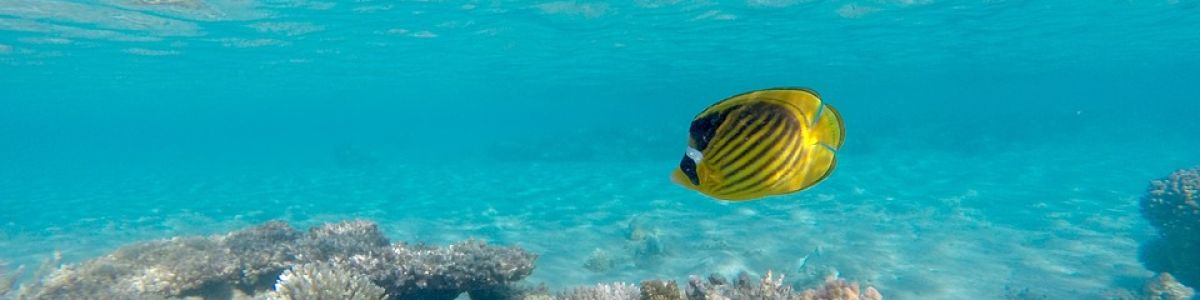 Headline for 5 Ways to explore the underwater world in the Maldives - Like never before!