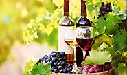 Best Yarra Valley Wine Tours From Melbourne | Yarra Tours