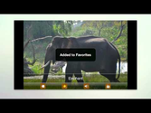 Kids Zoo Animal Sounds &Photos - Android Apps on Google Play