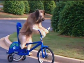 Best Covered Dog Bike Trailers Reviews 2014