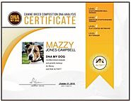 DNA My Dog – Canine Breed Identification Test Kit