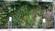 Best Outdoor Living Wall Panel and Planting Grid Reviews for 2014