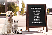 CBD Hemp Oil: 8 Things to Keep in Mind for Pet Health